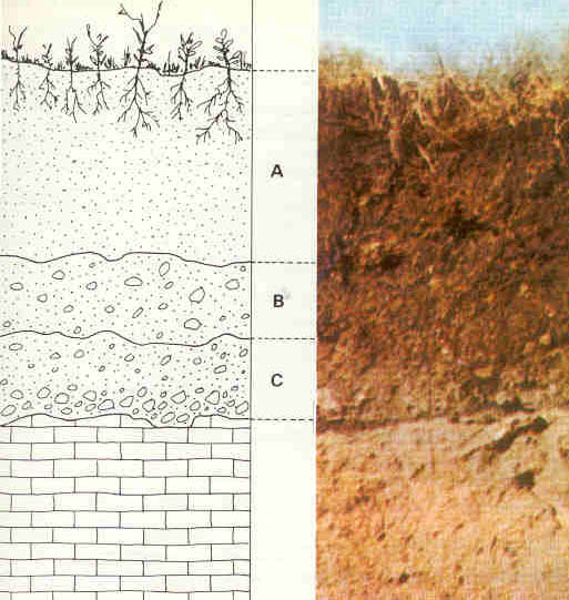 Estructura-suelo